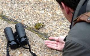 Vogelstimmenwanderung 'Alle Vögel sind schon da'