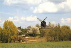 Bockwindmühle Badersleben