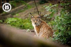 [(c): Tierfotografie Harz]