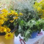 Blumengrüße Foto: Jeannette Schroeder