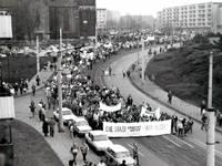 Buche, Kiefer und Eiche für den Tag der Deutschen Einheit