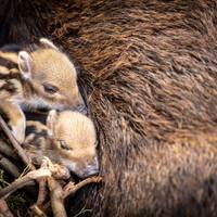 Süßer Nachwuchs im Halberstädter Tiergarten