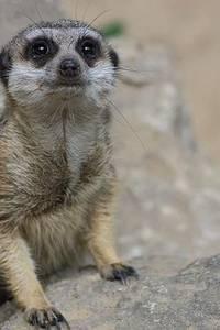 Tiergartenfest - Foto: Andy Nitzsche