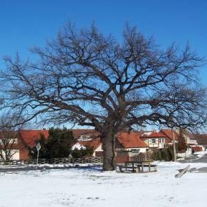 Winterliches Emersleben