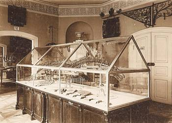 Städtisches Museum, Innenaufnahme, Dinosaurier Skelett im Raum V Innungssaal Köhler&Saemann, um 1920 [(c) Städtisches Museum Halberstadt]