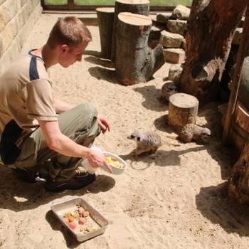 Tierpfleger/in Fachrichtung Zoo