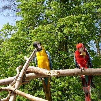 Höhepunkt bei jedem Tiergartenfest sind die tiergarteneigenen Tierpräsentationen, nun schon zum 35. Mal