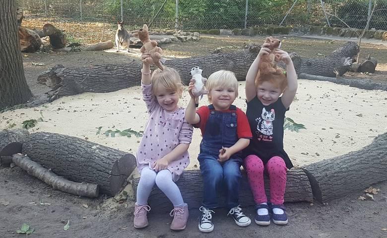Taufe: Stella, Simon und Luisa heißen die drei Tiergarten-Kängurus [(c) Stadt Halberstadt/Pressestelle]