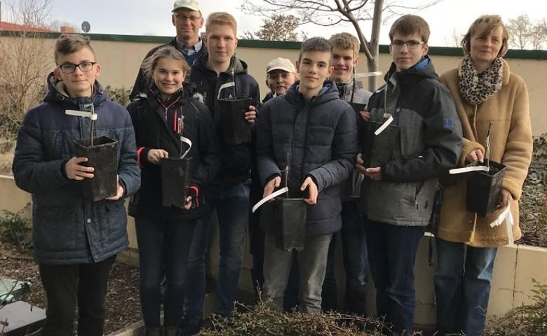 Halberstädter Jungfernapfel - Schüler veredeln Apfelsämlinge [(c) Stadt Halberstadt/Abteilung Stadtgrün]
