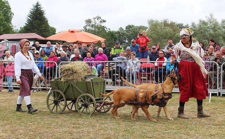 Harzer Landwirtschaftsfest kommt nach Halberstadt [(c) AMG - AgrarMarketingGesellschaft Sachsen-Anhalt mbH]