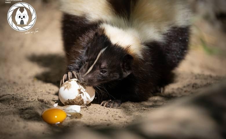 Frühstück im Tiergarten [(c) D. Neubert, Tiergarten Halberstadt]